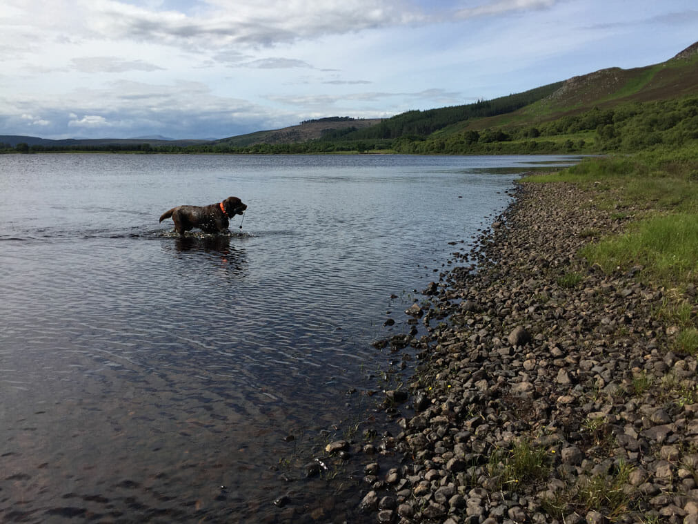 Inu im Loch Brora