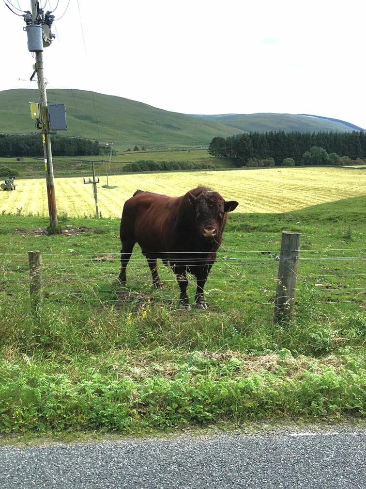 Loch Mary Bull
