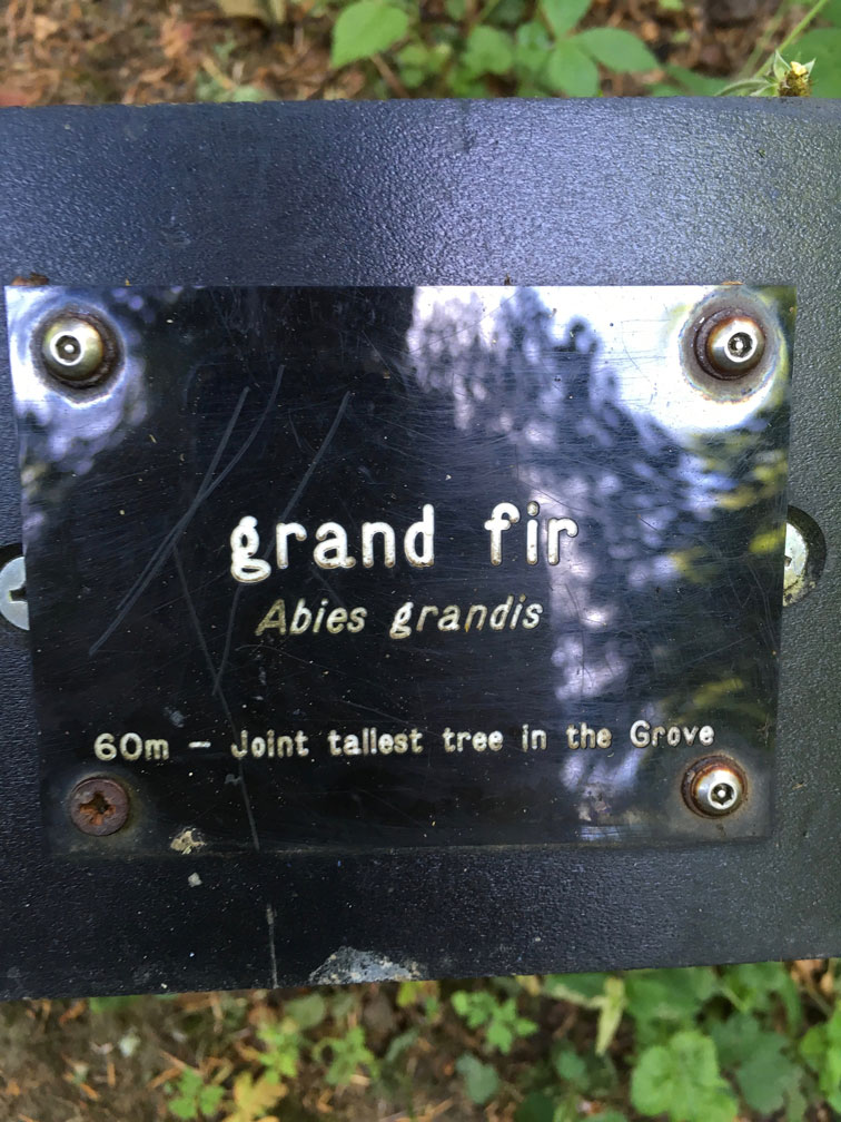 unter den Riesen in Diana's Grove